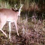 Hunter Creek - Hamilton County (AVAILABLE!)