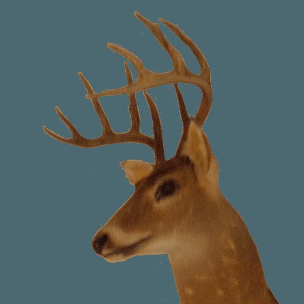 North Florida Deer Hunts Free Range Deer Boar Hunting At Its Finest
